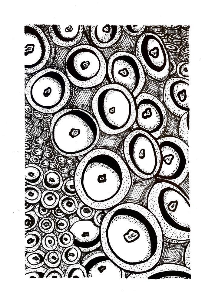 """Hanna Rabstejnek, """"Pattern Studies"""""""